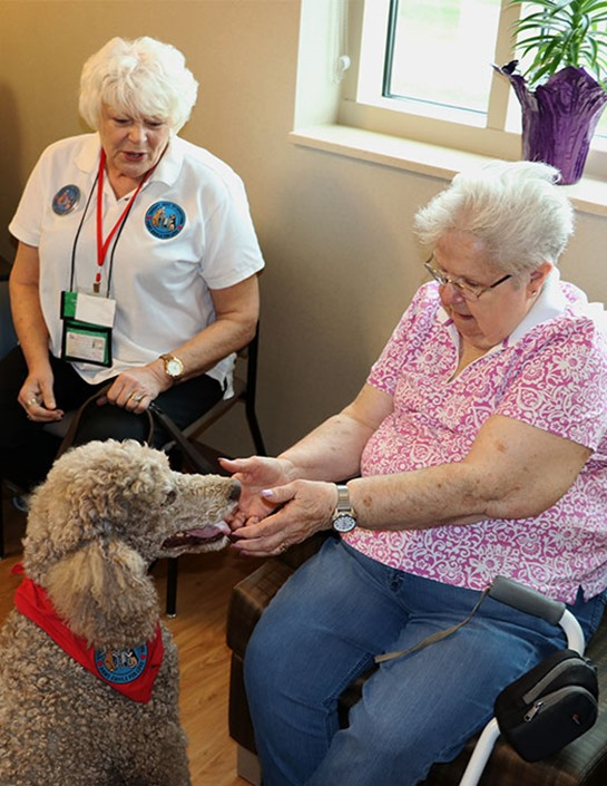 Ruby the therapy dog